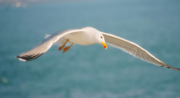 My friend, Jonathan Livingston Seagull  3