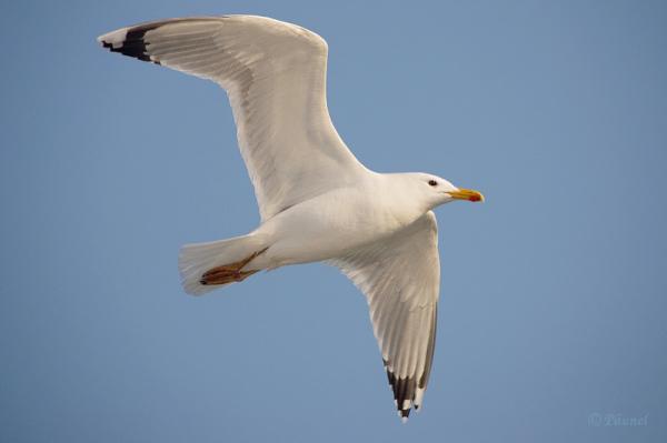 My friend, Jonathan Livingston Seagull 9