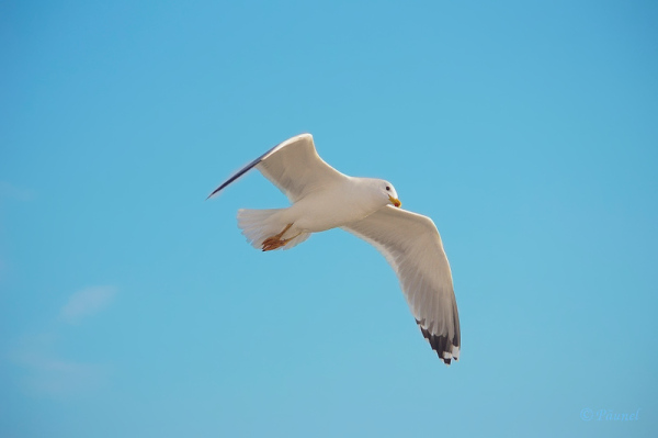 My friend, Jonathan Livingston Seagull 12