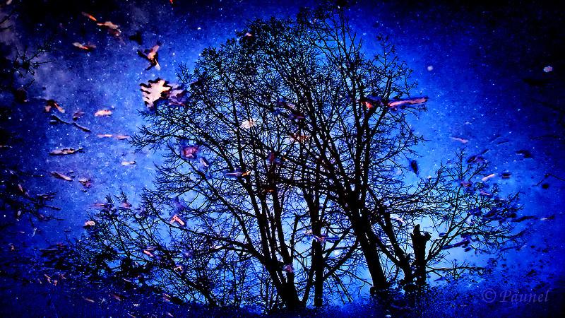 Galactic Tree
