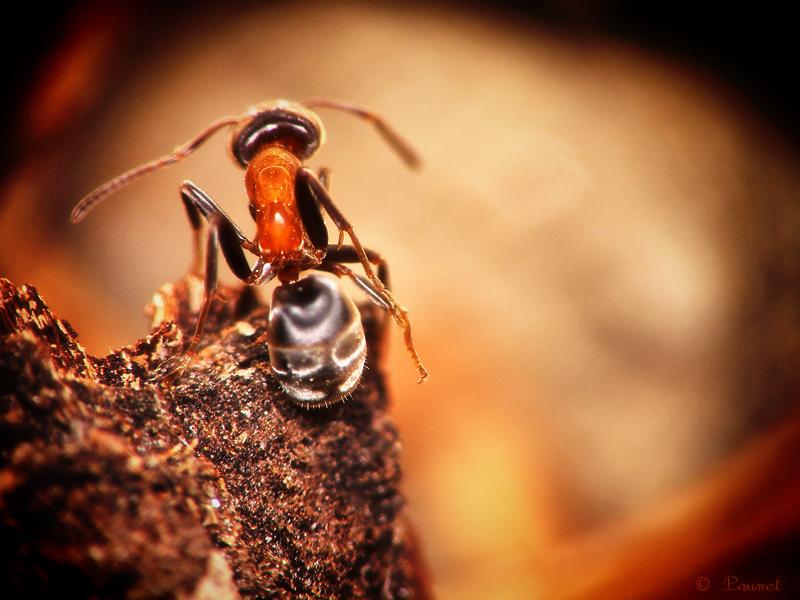 L'après-midi de la fourmi