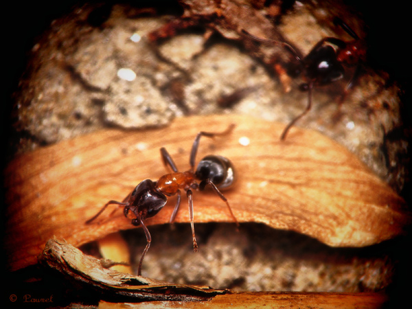 L' après-midi de la fourmi