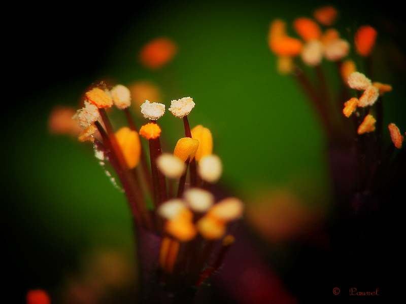 Micro-flowers for my micro-friends