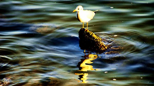 Water reflexes