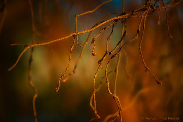 Light roots