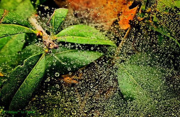 Univers of bubbles