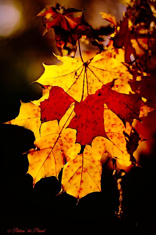 L'automne arrive