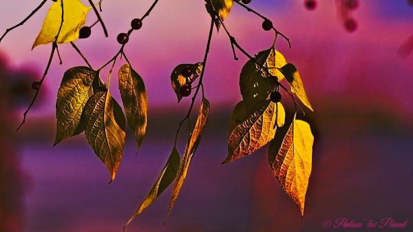 L'automne arrive toujours