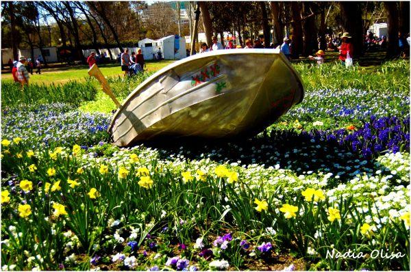 flowers, boat