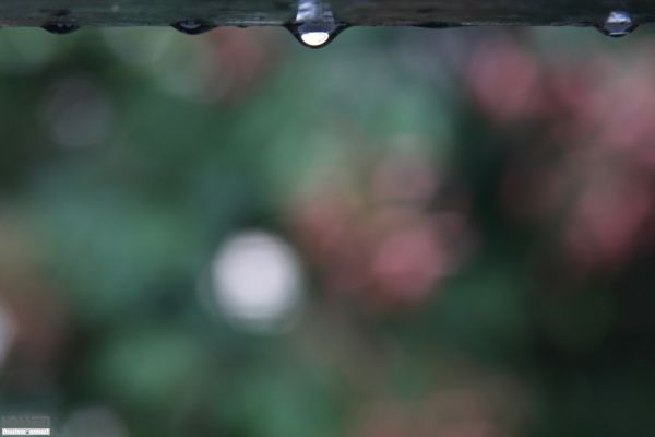 قطره ای از باران