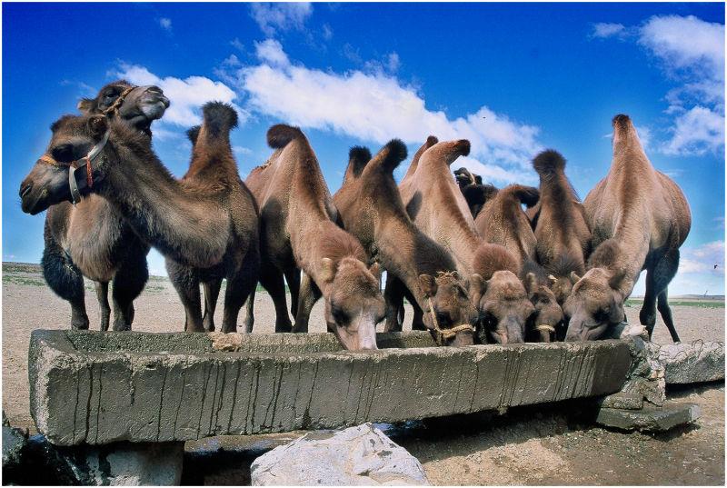 Repostando. Desierto del Gobi. Mongolia' 04.