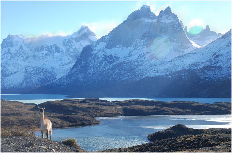 ¿Dónde están mis amigos guanakos? Patagonia'09