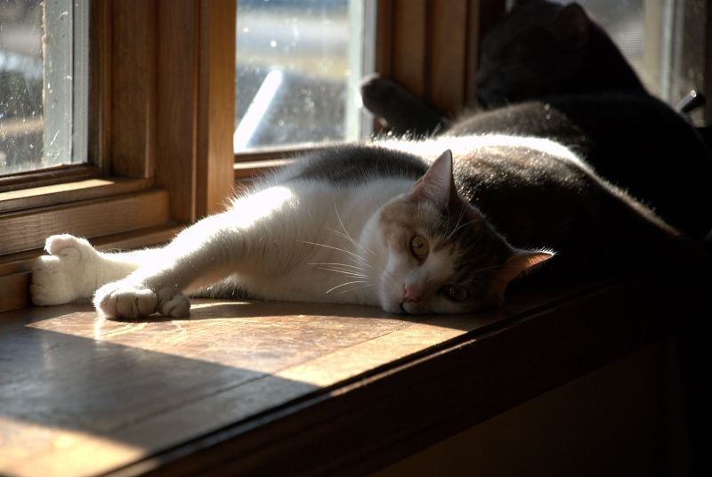 Cat laying in the sun on windowsill.