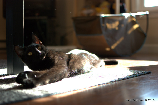 Black cat laying in the sunshine