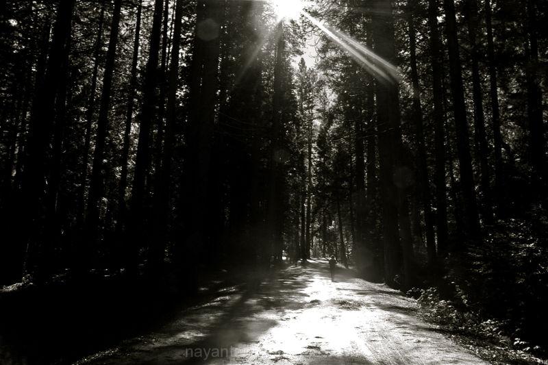 hiking trail sunbeams yosemite