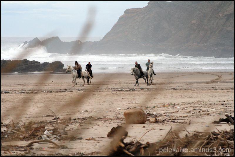 caballos animales
