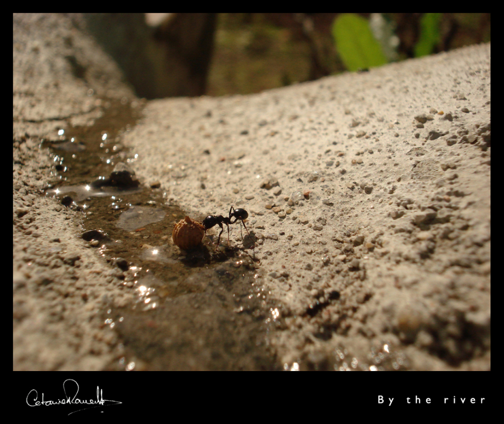 ant,river