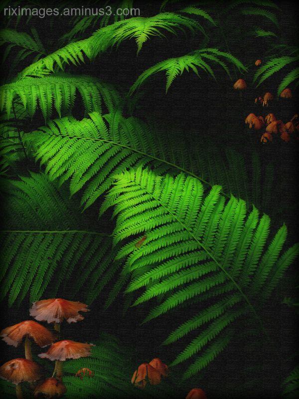 Ferns and Mushroom