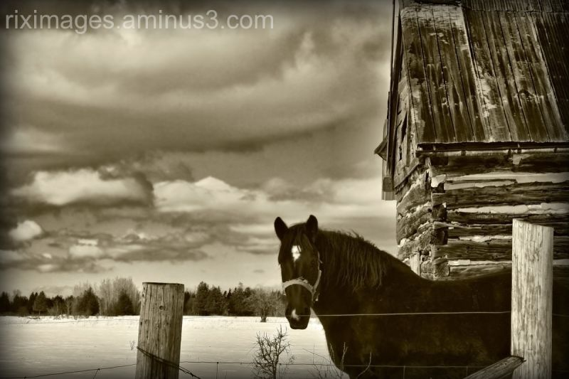 Horse in front of barn