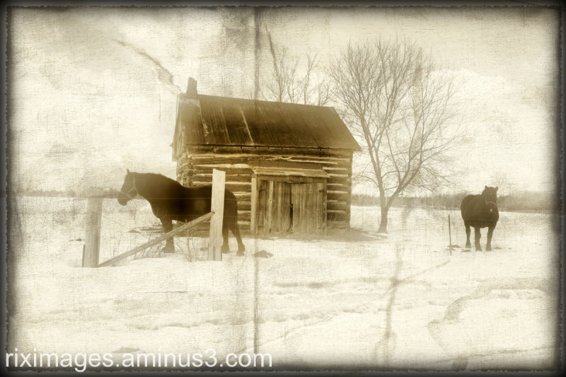 Two horses and barn