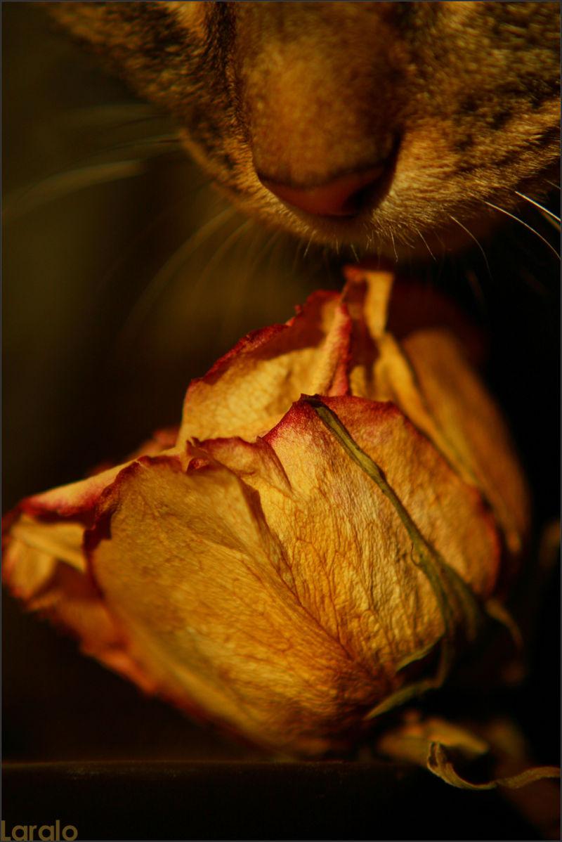 Mignonne, allons voir si la rose...