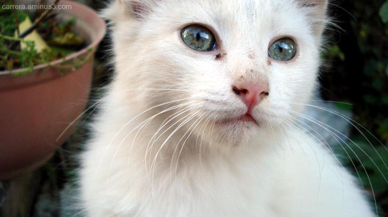 Grandma's cat
