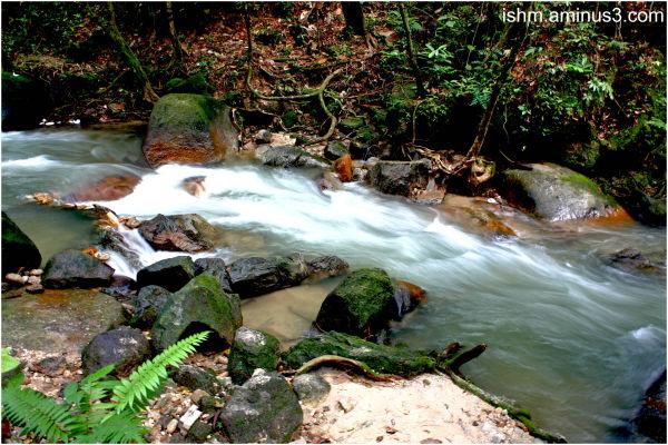 taman rimba ampang stream rain forest
