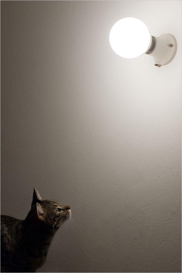...gatti