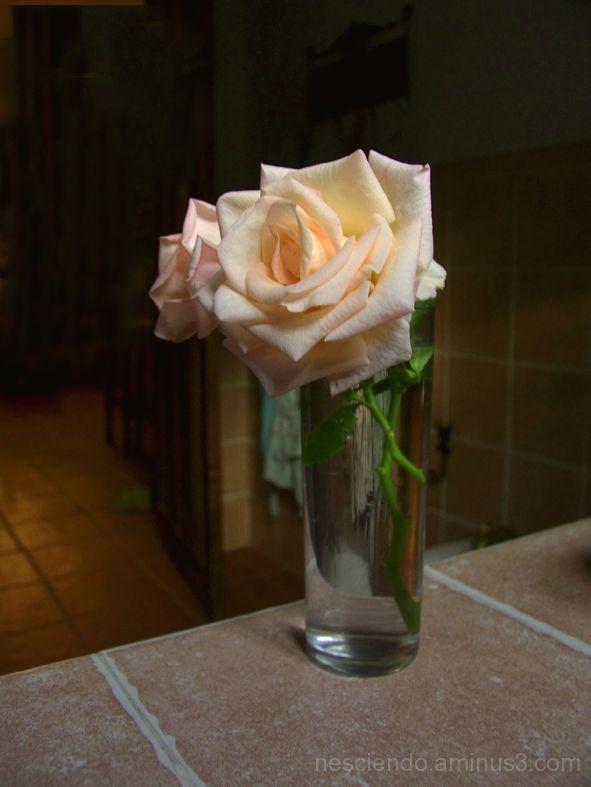 Bodegon Rosa