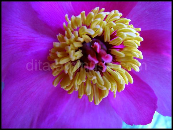 Pampalònia, joia botànica