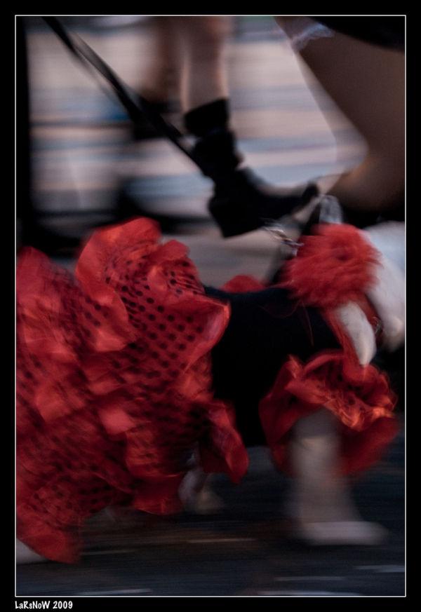 Carnaval Lanzarote - Flamenco dog