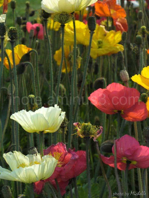 Flowers flowers again...