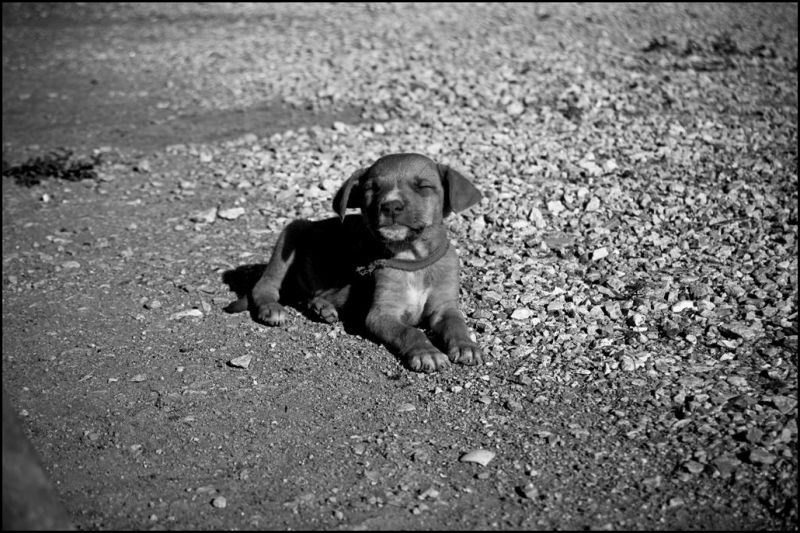 A little puppy in the ground