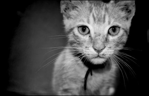 A kitten nearby