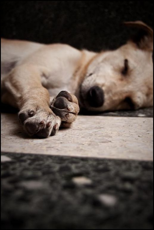 A dog sleeping in the floor, resting