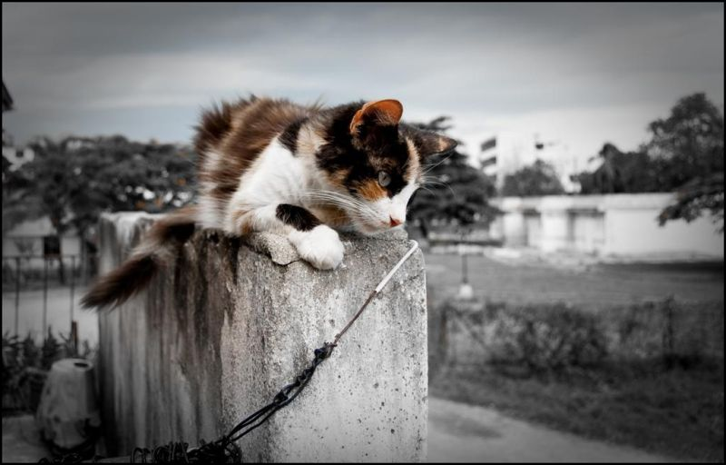 My cat in the balcony - Mi gata en el balcón