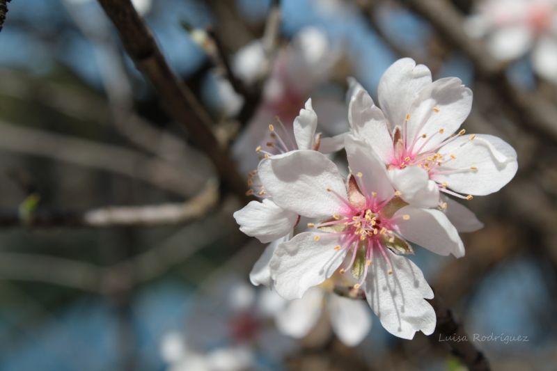 primavera