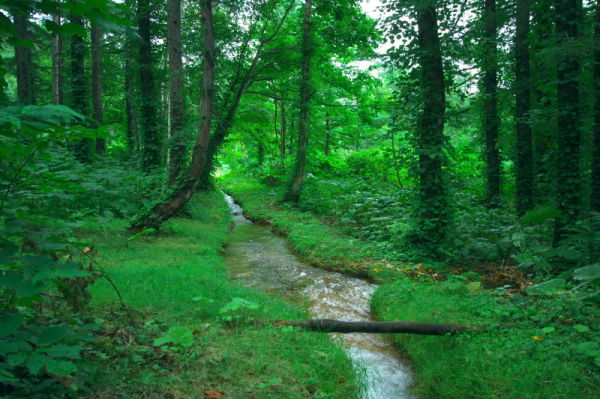 In northern woods #3  -Stream-