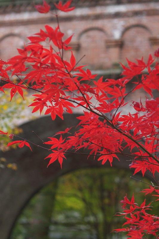 Autumn leaves 2008 #5