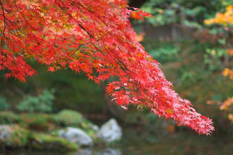 Autumn leaves 2008 #6