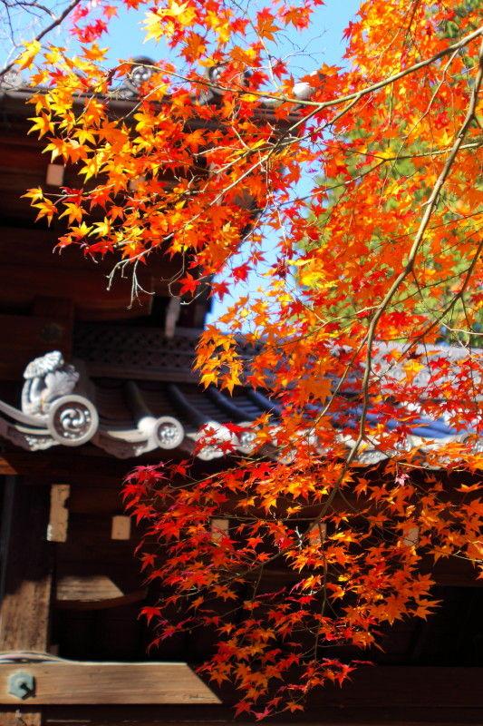 Autumn leaves 2008 #10