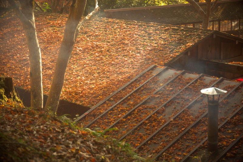 Autumn roofs