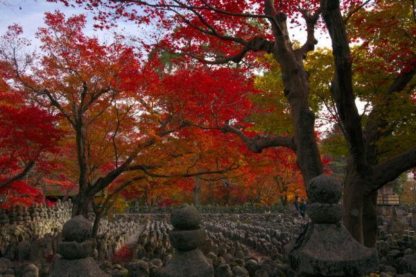 念仏寺の秋