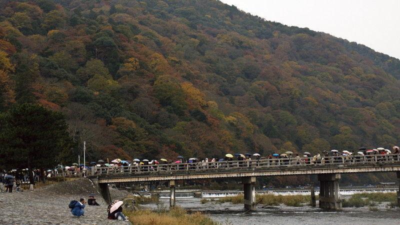 秋の渡月橋、雨 Rainy autumn day at Togetsu Bridge