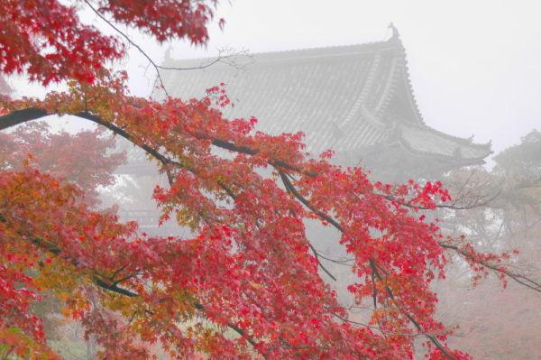 霧の善峯寺 Misty autumn temple #1