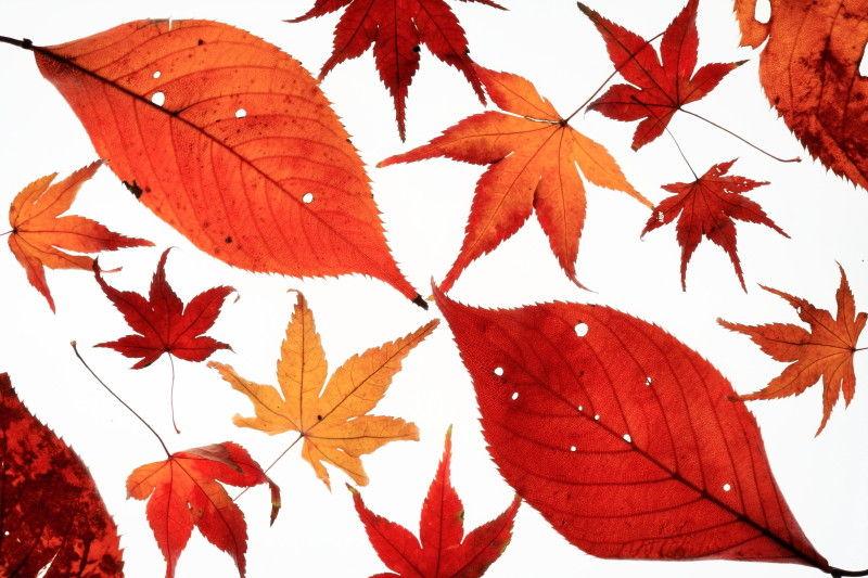 Autumn collection #3