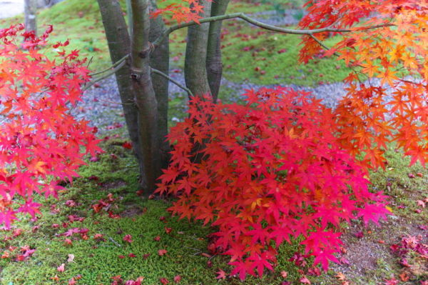 Autumn leaves in a dream...