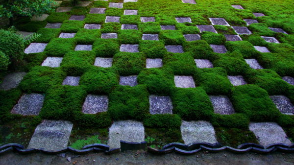 squares among green