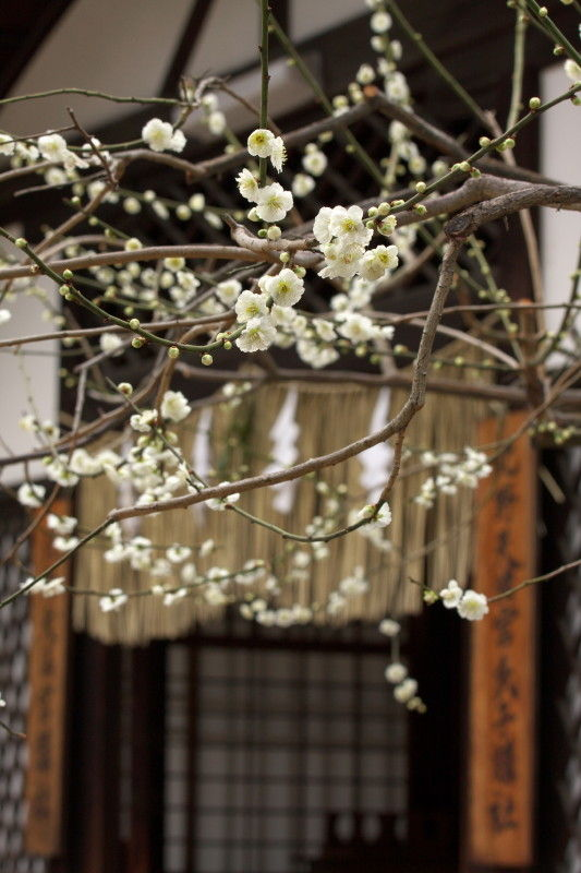 Season of plum-blossom #1
