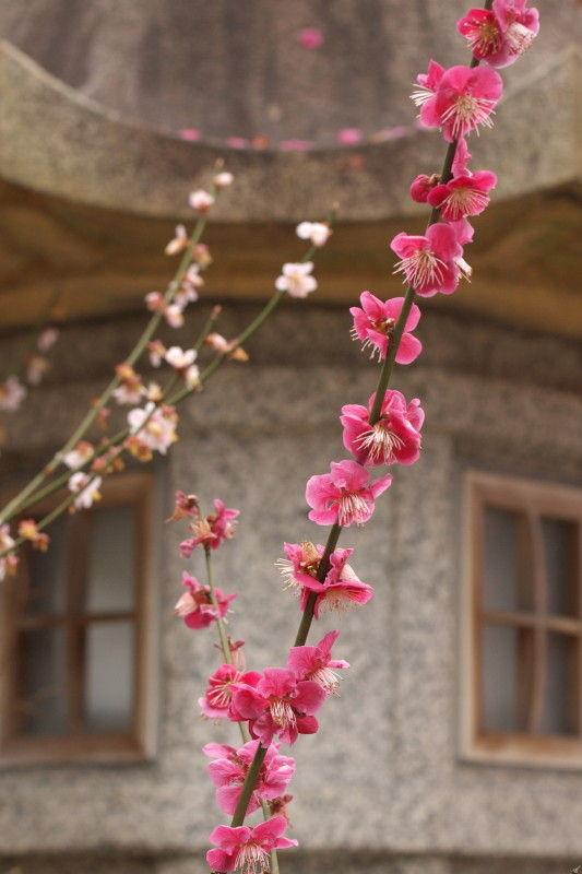 Season of plum-blossom #2